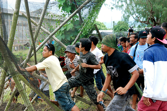 Crowd breaking through fence in prior to destroying field of golden rice, Phillipines. Photo courtesy Philippine Department of Agriculture Regional Field Unit 5